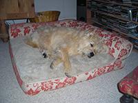 FreddieSleepsm